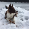 polli im schnee_3